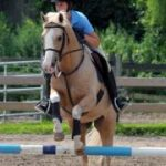 Thomas School of Horsemanship Summer Day Camp