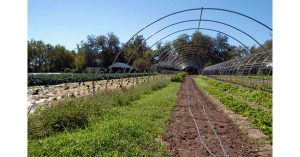 Organic Farm Things To Do On Long Island with Your Local Kids