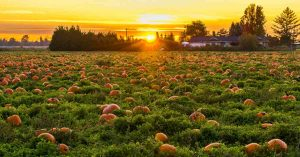 Pumpkin Patch Things To Do On Long Island with Your Local Kids